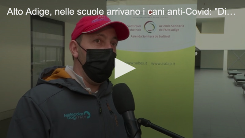 """In Südtirol kommen Anti-Covid-Hunde in die Schulen: """"Sie unterscheiden das Positive vom Gesunden"""""""